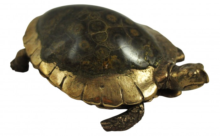 tortue /fossile d'oursin